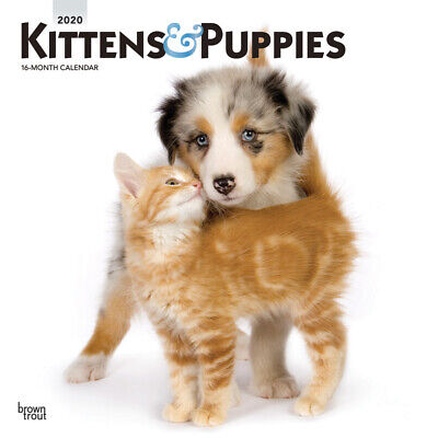 Kittens & Puppies 2020 Square FOIL Wall Calendar by Browntrout