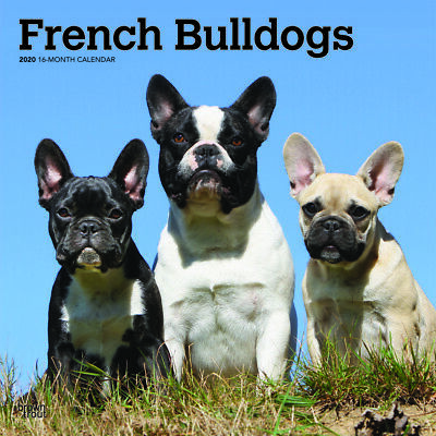 French Bulldogs 2020 Square Wall Calendar by Browntrout