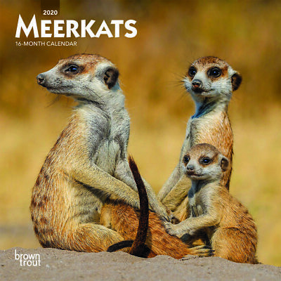 Meerkats 2020 Mini Wall Calendar by Browntrout