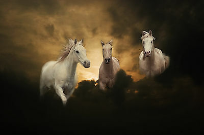 Blanc Chevaux en Nuages Grand Photo Affiche Cheval Montage Poney A3 Taille Image