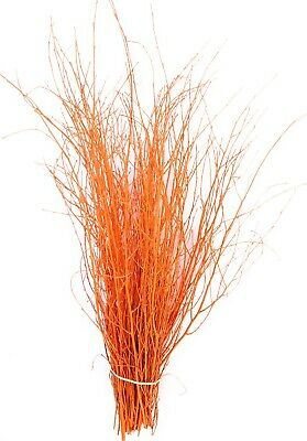 Decorative Coloured Birch Twigs and branches Pumpkin Orange - 90cm's - 25 Stems