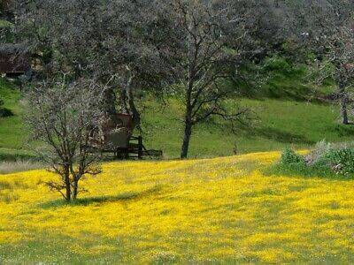 0.5 Acres residential lot in Tehachapi, CA for sale or trade