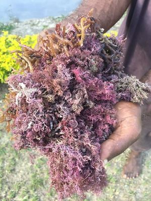 Jamaican Purple Sea Moss (Raw, Wildcrafted) - Dr Sebi Approved