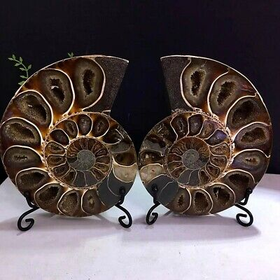 733g Natural A Pair of Ammonite Fossils Slice Nautilus Jade Shell Specimen+Stand