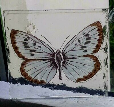 Stained Glass  Large Blue Butterfly -  Kiln fired fragment pane piece!