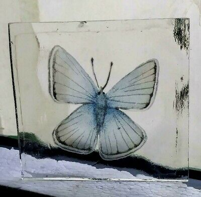 Stained Glass Small Blue Butterfly -  Kiln fired fragment pane piece!