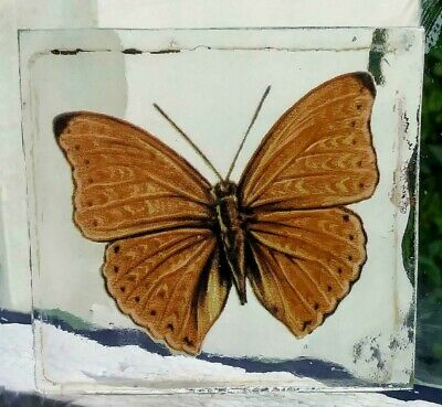 Stained Glass Unknown orange Butterfly -  Kiln fired fragment pane piece!