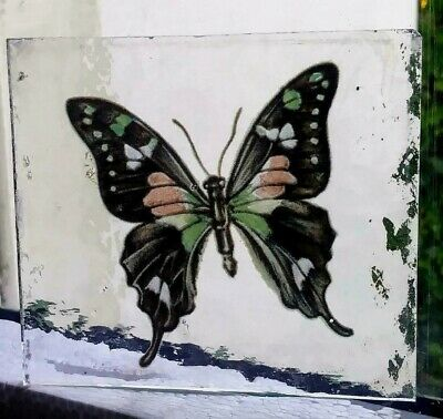 Stained Glass Unknown large Butterfly -  Kiln fired fragment pane piece!