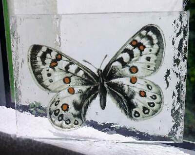 Stained Glass Unknown Butterfly -  Kiln fired fragment pane piece!