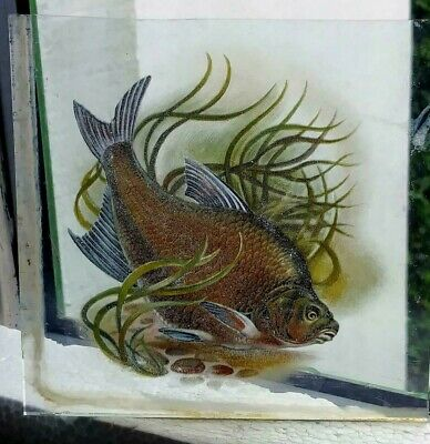 Stained Glass Bronze Bream Fish - Kiln fired hand rare fragment pane fishing!