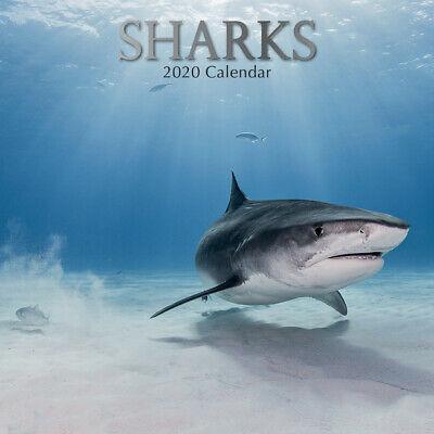 Sharks 2020 Square Wall Calendar by Gifted Stationery
