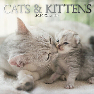 Cats & Kittens 2020 Square Wall Calendar by Gifted Stationery