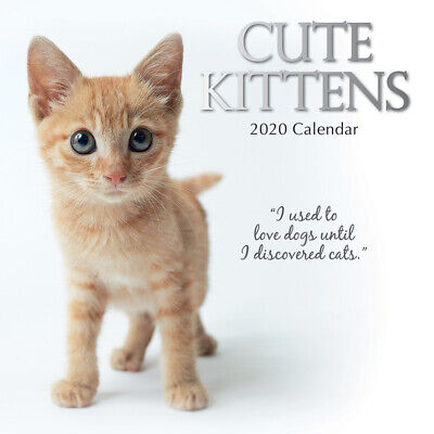 Cute Kittens 2020 Square Wall Calendar by Gifted Stationery