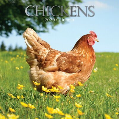 Chickens 2020 Square Wall Calendar by Gifted Stationery