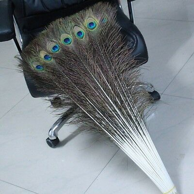 Wholesale! 10-100pcs beautiful natural peacock feather 55 - 60 cm / 22 - 24 inch