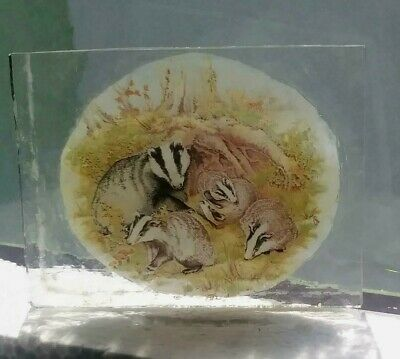 Stained Glass Badgers -  Kiln fired  fragment vintage pane!