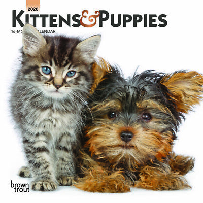 Kittens & Puppies 2020 Mini Wall Calendar by Browntrout