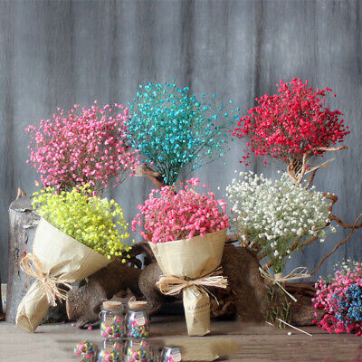 Gypsophila Natural Dried Flowers Bouquet Party Home Decor Dried Flower Sky Star