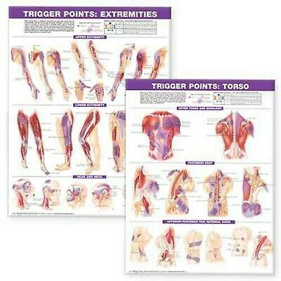 Trigger Point Chart Set : Torso and Extremities, Paperback by Anatomical Char...