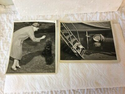 2 Genuine WW2 Official US Navy Photograph Woman Plays Scotty Dog & Trapped Dog