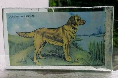 Stained Glass Golden Retriever dog - Kiln fired fragment  pane!