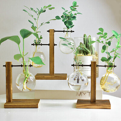 Hydroponic Vase Solid Wooden Stand Glass Bulb Plants Flowers Terrarium Container
