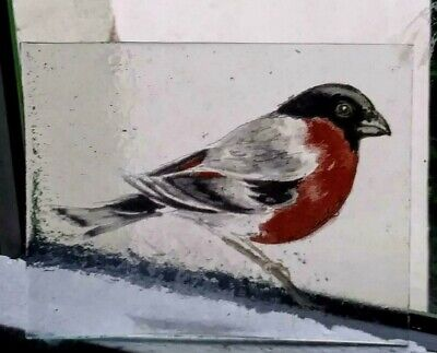 Stained Glass Bullfinch bird -  Kiln fired transfer fragment bird pane!