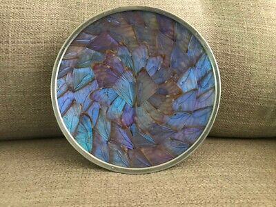 Vintage Blue Iridescent Butterfly Wing Plate Wall Hanging Brazil