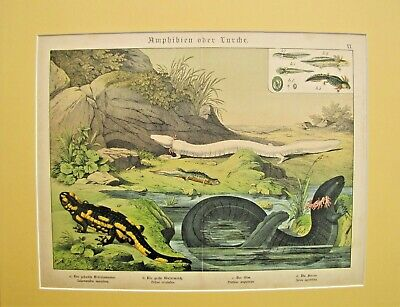 19th. Century German Hand Colored Print from a Book - LIZARDS