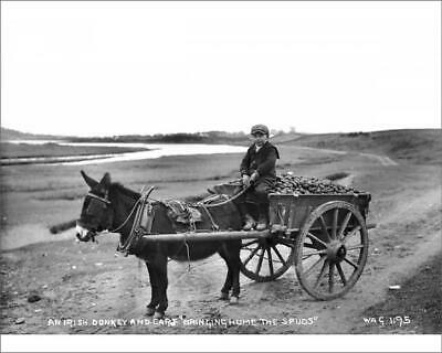 "10""x8"" (25x20cm) Print An Irish Donkey and Cart Bringing Home the..."