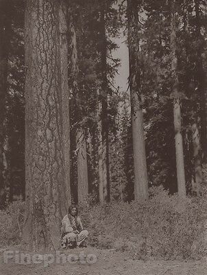 c.1900/72 Edward Curtis Photogravure Native American Indian Klamath Tribe Forest