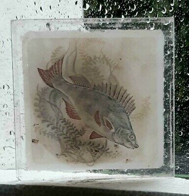 Stained Glass Perch Fish - Kiln fired hand rare fragment pane fishing!