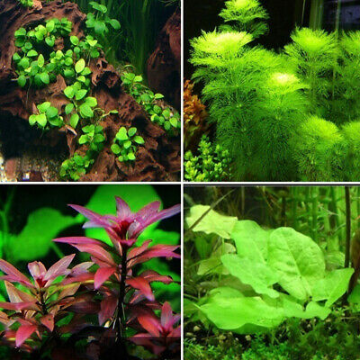 Mix Moss Grass Aquarium Plant Fish Tank Decoration Easy Grow Aquatic'Plant Seeds