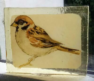 Stained Glass Sparrow bird -  Kiln fired transfer fragment amber glass pane !