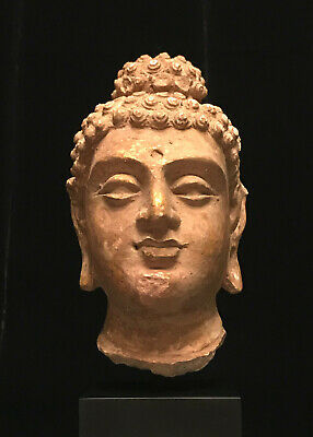 Very Nice Authentic 6th Century A.D. Gandhara 犍陀罗 Stucco Gautama Buddha Head