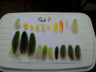 20 Pieces Mixed Amazon Parrot Feathers, Green, Yellow, Lime - Pack 7
