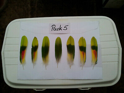 7 Pieces Amazon Parrot Tail Feathers, Red, Green, Yellow - Pack 5