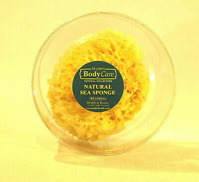 Natural Sea Sponge Honeycomb 15-16 cm 6 ins Medium MADDOX NPX16