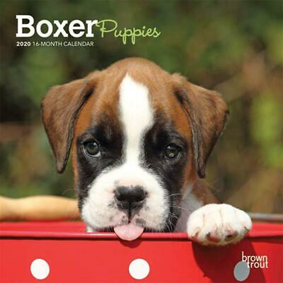 2020 Calendar, Boxer Puppies 16-Month Mini Wall Calendar NEW by Browntrout