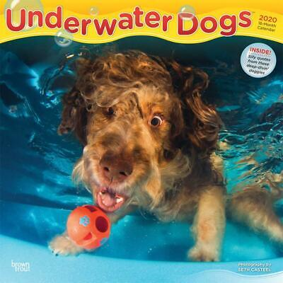Underwater Dogs 2020 16-Month Square Wall Calendar by Browntrout