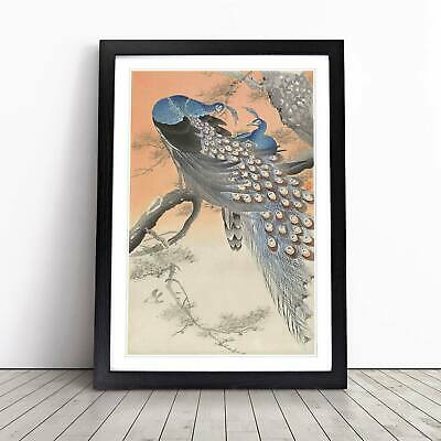 Two Peacocks Flowers Floral Asian Bird Ohara Koson Wall Art Framed Picture Print