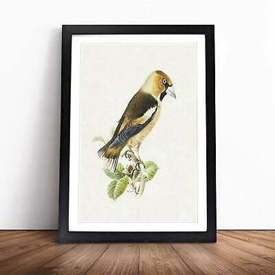 Hawfinch Bird Flowers Floral Vintage Von Wright Wall Art Framed Picture Print