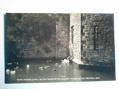 English postcard Swan ringing bell for food in Wells Bishop's Palace