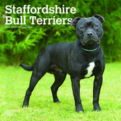 Staffordshire Bull Terriers 2020 Square Wall Calendar by Browntrout