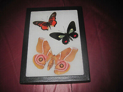"3 real mounted butterflies framed 6x8"" riker  mount collection #lepid u5"