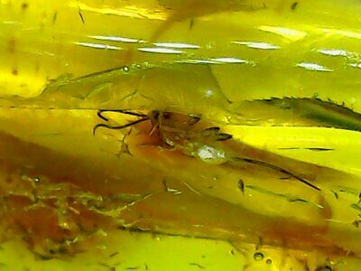 Genuine baltic amber stone with inclusions of fossil insects.1.2  gr