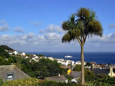 Holiday Cottage in Mousehole, Cornwall - 21 March to 28 March 2020