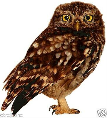 American Brown OWL perched Wildlife Tree Bird - Window Cling Decal Sticker - NEW