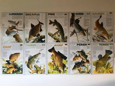 Improve Your Coarse Fishing Magazine Vintage Fishing Print / Poster 90's Retro