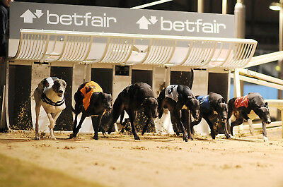 Collection Of Greyhound Betting Trading Systems Strategies & Guides Betfair